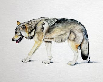 "ORIGINAL PAINTING Looking Forward, Wolf, Watercolor, home decor 8"" x 10"""