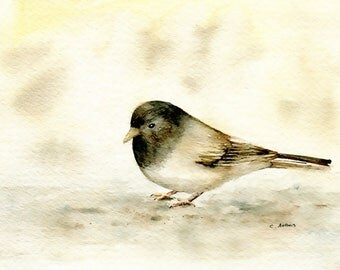 Original Painting of a Junco 5 x 7 Watercolor