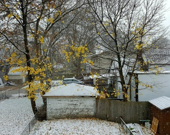 landscape photography, winter photograph, autumn photograph, first snow, Michigan, fall leaves, gold, golden, nature, backyard, trees, white