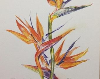 Bird of Paradise, botanical study