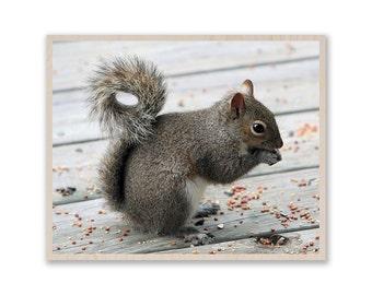 "16""x 12"" Squirrel Photo on Wood, Custom Photo Print- Photo on Birch Wood, Image on Plywood, Custom Wood Prints, Custom Photo Prints W018"