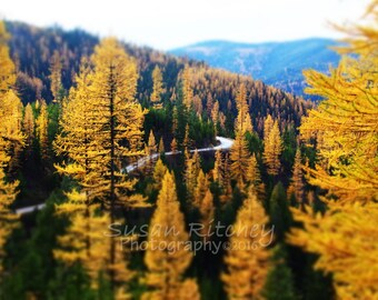 Montana Mountain Road, 5x7 Photo in 8x10 Mat, Tamarack Trees