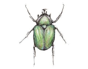 Beetle Giclee Print