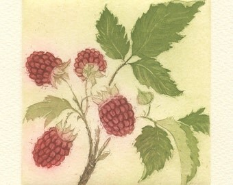 Raspberries, Original Fine Art Aquatint Etching