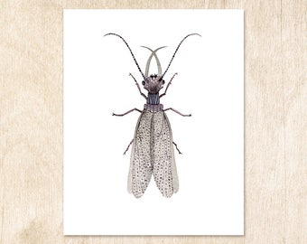 Grey Insect print watercolor painting nature 5 x 7 ; 8 x 10