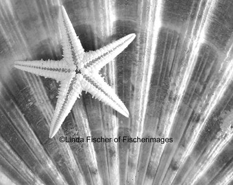 Seashell Starfish Photo Print Nature Black & White Wall Art Home Deco Linda Fischer of Fischerimages Fine Art Photography