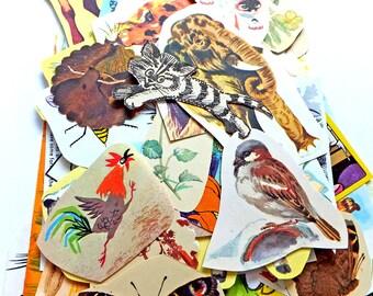 Nature Paper pack, paper ephemera lot, Birds, Animals, Butterflies, Flowers 70+ pieces, paper ephemera pack,  journal pack, kids craft pack