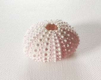 Pink Urchin Seashell, All Natural, Perfect for Beach weddings, Cottages, Nautical Decor