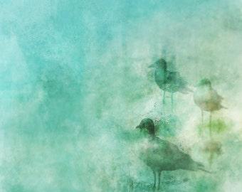 SEA SHORE 02: Giclee Fine Art Print 13X19