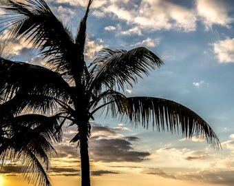 Majestic Palm - Fine Art Photo, Wall Decor, Key West Florida, Palm, Palm tree, sunset, Florida Sky, Key West Photo,
