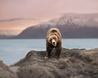 Grizzly Bear Digital Background and Overlay - Brown Bear Overlay, Alaska Water Mountains Digital Background