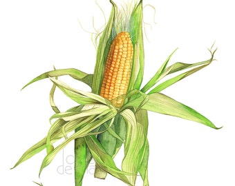 Corn print, Vegetable print, vegetable watercolor, ear of corn print, ear of corn watercolor, kitchen wall art, food wall art C15416 A4 size