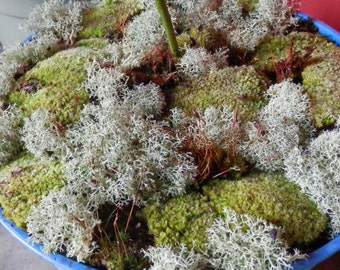 Ethically Wild-Harvested Live Moss