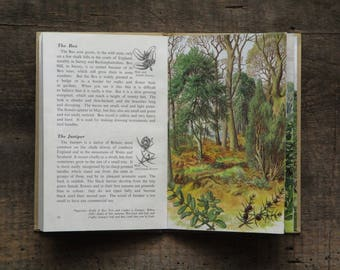 Vintage Ladybird Book of Trees, with dust jacket,  by Brian Vesey - Fitzgerald, illustrated by S. R. Badmin
