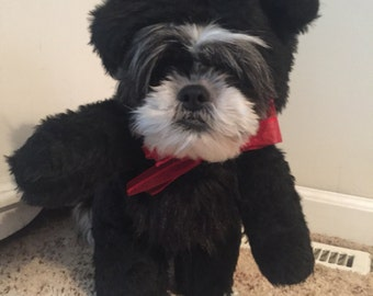 Adorable all Black Colored Teddy Bear Dog Halloween Costume