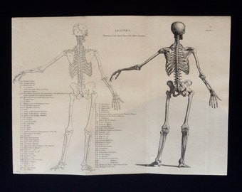 Antique Engraving ANATOMY Dissection SKELETON BONES Bookplate 1873 Victorian Vintage Print 1870s