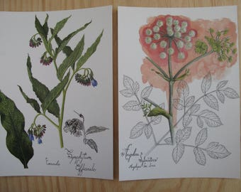 postcards, Aquarelles botaniques / Botanical watercolors