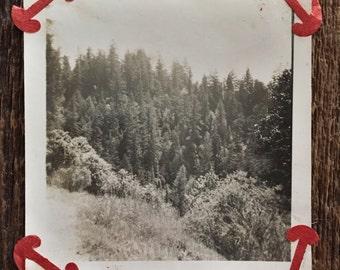 Original Vintage Photograph Beyond the Evergreens