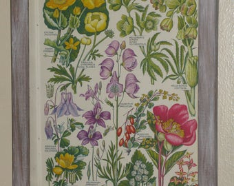 Authentic Mid Century Botanical Print Bound Multi Color Illustration Charming Country Decor