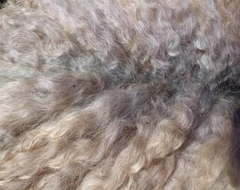 Pepper's Shetland and Teeswater Fleece