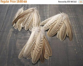 12 Ringneck Pheasant Wing Feathers ~ Cruelty Free