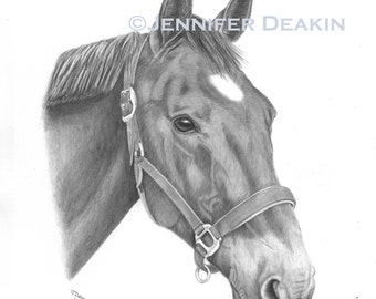 Pet portraits - Hand drawn from your own photo A3 **HORSES DOGS CATS