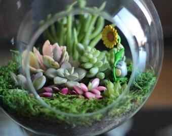 Succulent Terrarium, Succulent Arrangement (Large)