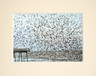 Starling Murmuration/Flock of Birds unique mounted prints - LAST ONE!