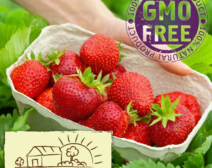 Jewel Strawberry Plants Organic 20 Bare Root Plants June Bearing Strawberries Shipping Now