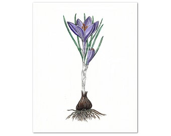 Purple Crocus Watercolor Art Print, Spring Flower Bulb, Botanical Floral Minimalist Art, Modern Rustic Wall Art, Cottage Chic Decor