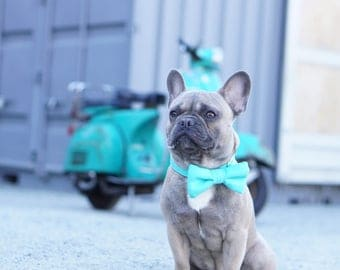 Wedding Dog Collar and Bow Tie in Turquoise, Dog of the Bride by Bullenbeisser Dog PLEASE READ Item Details before ordering.