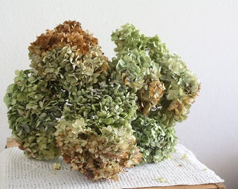 10 Dried Hydrangea flowers DIY craft bouquet