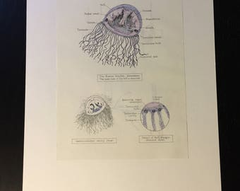 Water-dwelling Creatures – Reclaimed Anatomy Drawings