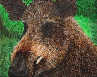 Wild Boar Portrait on box canvas
