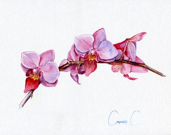 Orchid, pink, Flowers, Watercolor Original Painting from the Artist, Svetlana Smirnova