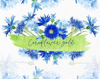 Cornflower blue.  Gold and blue watercolor clip art, hand drawn. Romantic wedding, blue, light blue flowers tender, wedding invitations