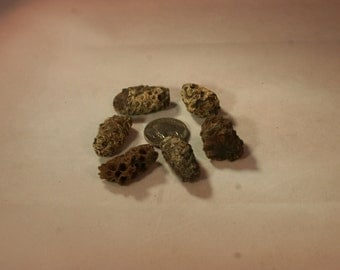Agatized Pine Cones # 640J