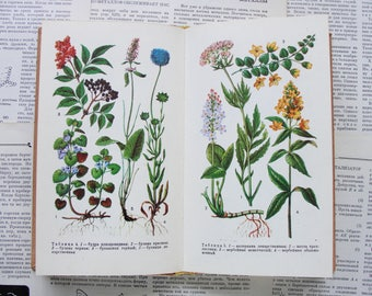Determinant of Forest Medicinal Plants (In Russian) - 24 sheets of illustrations (48 Plates) - Hardcover 1978. Vintage Botanical Book. Herbs