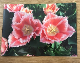 Pink tulips photo card A5 from Eden project blank inside
