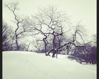 Deep Winter Central Park NYC Photograph by Artist Fiona Hueston