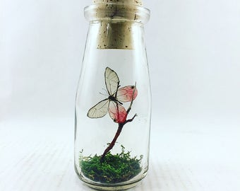 Rustic Milk Bottle | Flutter by Katie | Butterfly Display | Accent Jar | Pink Glasswing Butterfly | Sculpture | Home Decor | Pink