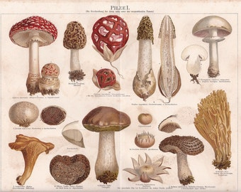"Chromolithograph, ""Mushrooms I."""