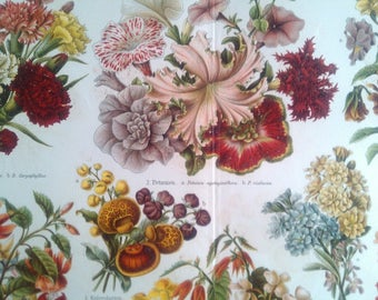 "Chromolithograph ""emergence of garden plants"