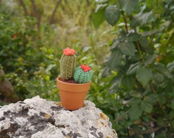 Cactus seedling green cotton crochet with red flowers and orange coral