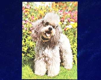 1960's Poodle Dog Postcard, West Germany Mother's Day!
