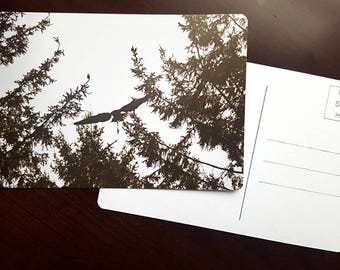 Blue Heron, Fine Art Photography Postcard, Flying Bird, Inspirational Card, New Beginnings Card, Unique Greeting Card