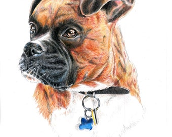 Custom Colored Pencil Pet Portrait