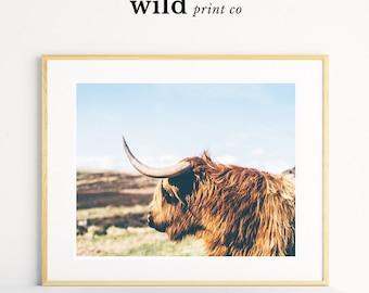 Highland Cow Print Cow Print Animal Wall Art Poster Print Landscape Print