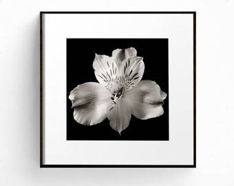 Square Print, Flower Wall Art, Black and White Print, Flower Photograph, Floral Wall Art, Bedroom Art, Romantic Art, Lily Print