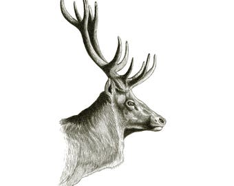 Stag Art Print | Pencil Wildlife Drawing | Deer Sketch | From Original Rustic Animal Graphite Illustration | Lodge or Cabin Decor | Up North